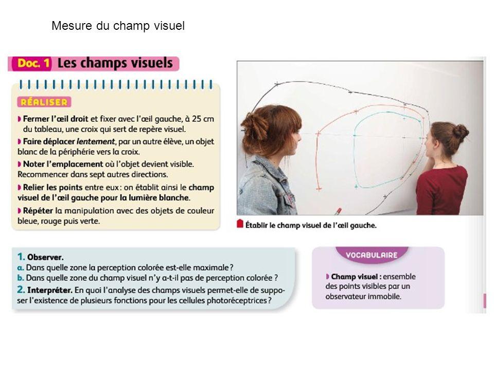 Mesure du champ visuel
