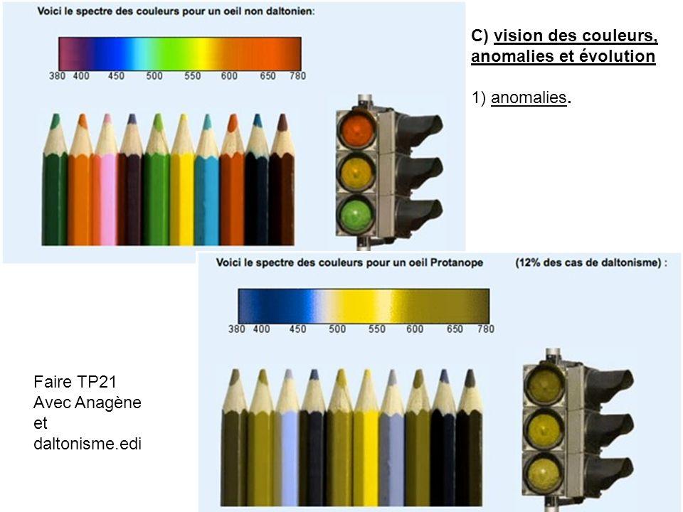 C) vision des couleurs, anomalies et évolution