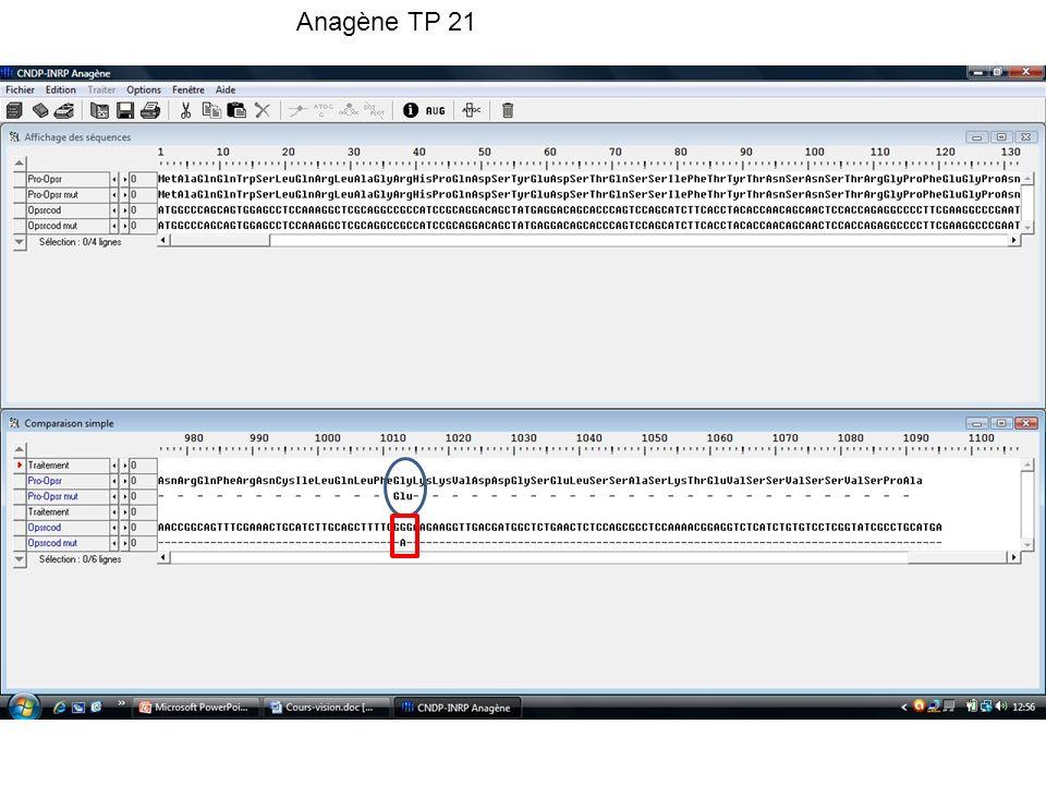 Anagène TP 21 Mutation: adénine remplace guanine dans l'ADN