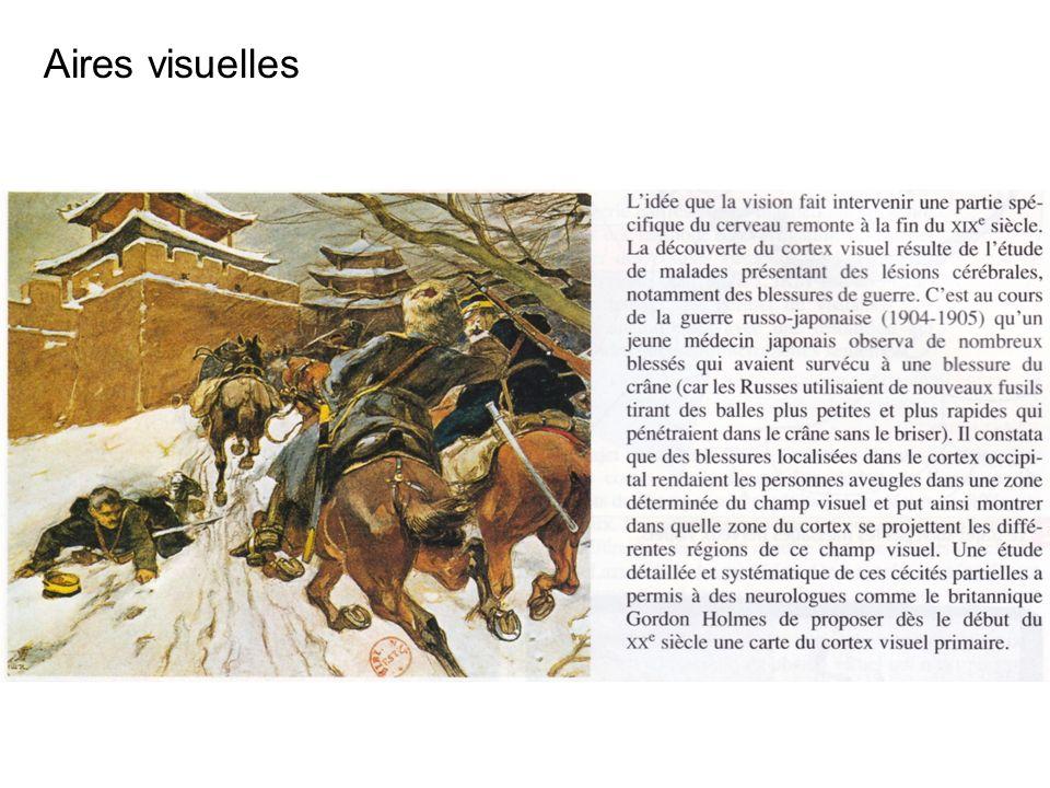 Aires visuelles Role observation fortuites…