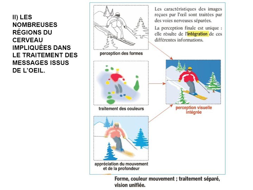 II) Les nombreuses régions du cerveau impliquées dans le traitement des messages issus de l'oeil.