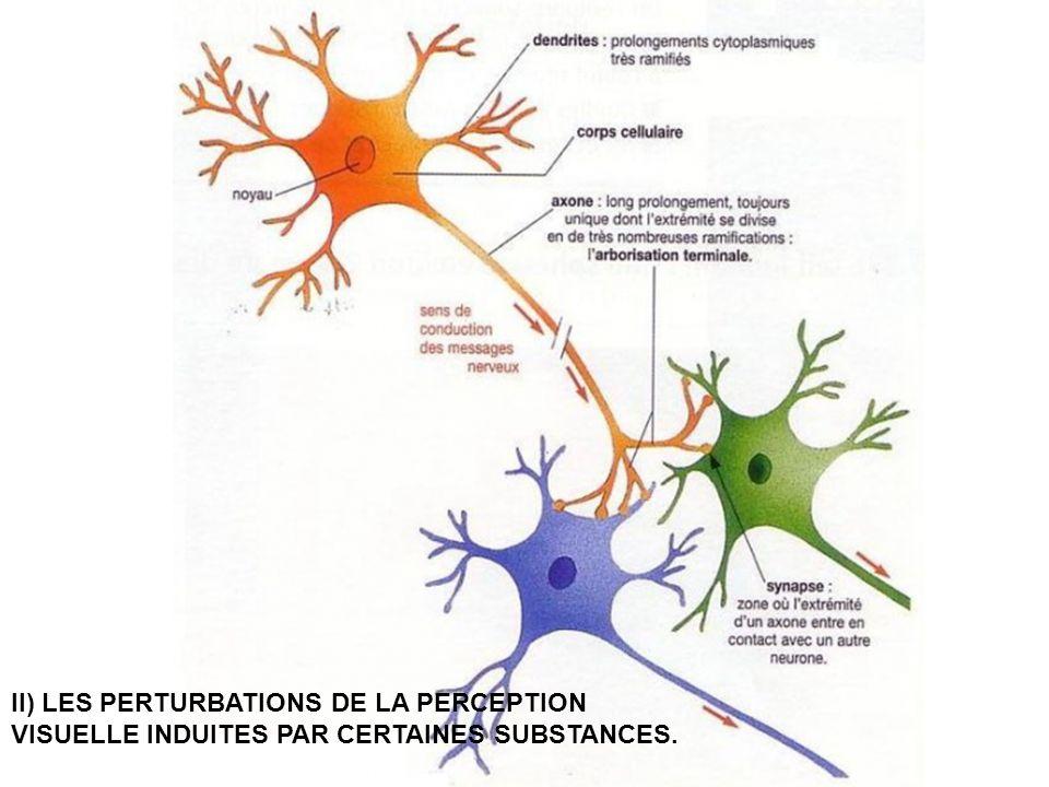 A l'intérieur du cerveau, la communication entre neurones se fait au niveau de synapses.