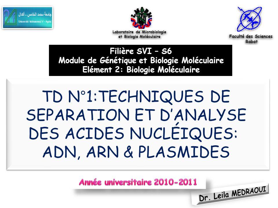 Laboratoire de Microbiologie et Biologie Moléculaire