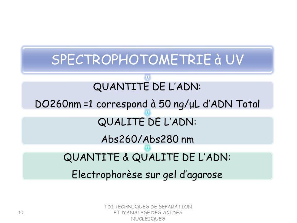 SPECTROPHOTOMETRIE à UV