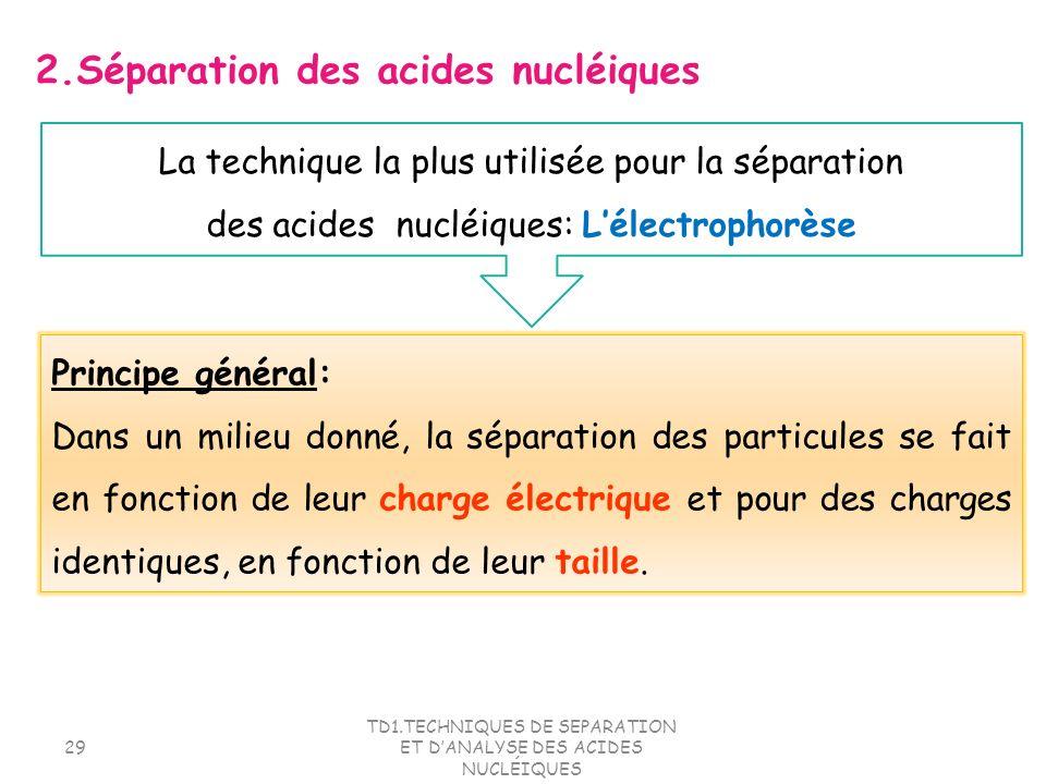 2.Séparation des acides nucléiques