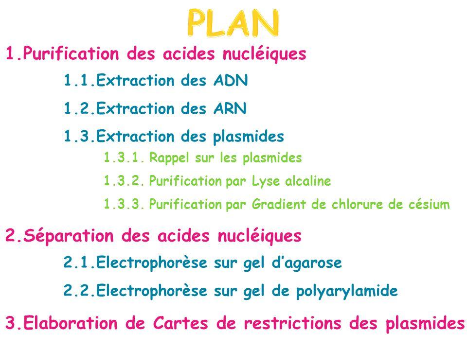 PLAN 1.Purification des acides nucléiques