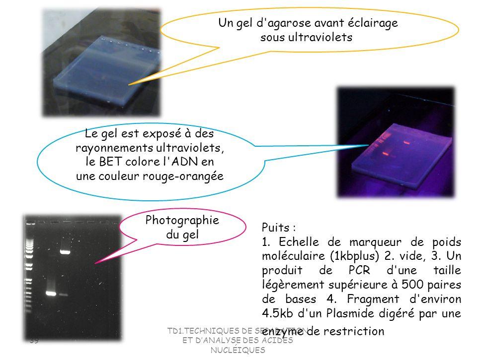 Un gel d agarose avant éclairage sous ultraviolets