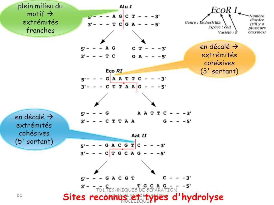 Sites reconnus et types d hydrolyse