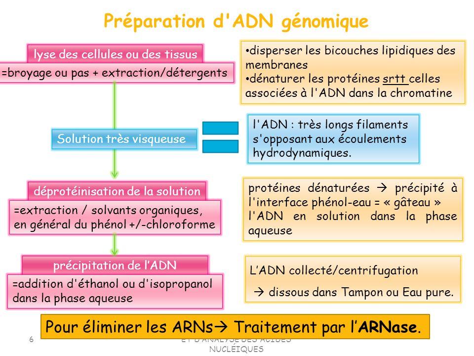 Préparation d ADN génomique