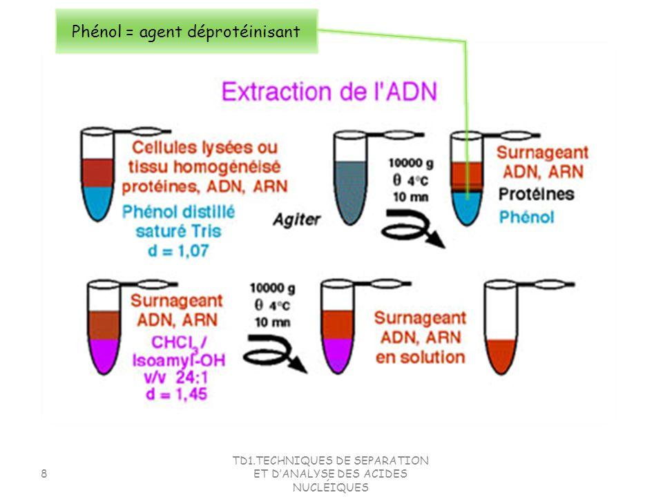 Phénol = agent déprotéinisant