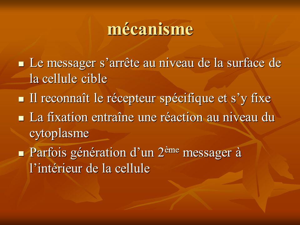 mécanisme Le messager s'arrête au niveau de la surface de la cellule cible. Il reconnaît le récepteur spécifique et s'y fixe.