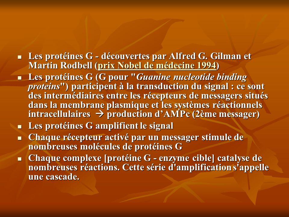 Les protéines G - découvertes par Alfred G