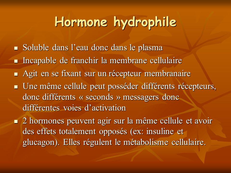 Hormone hydrophile Soluble dans l'eau donc dans le plasma