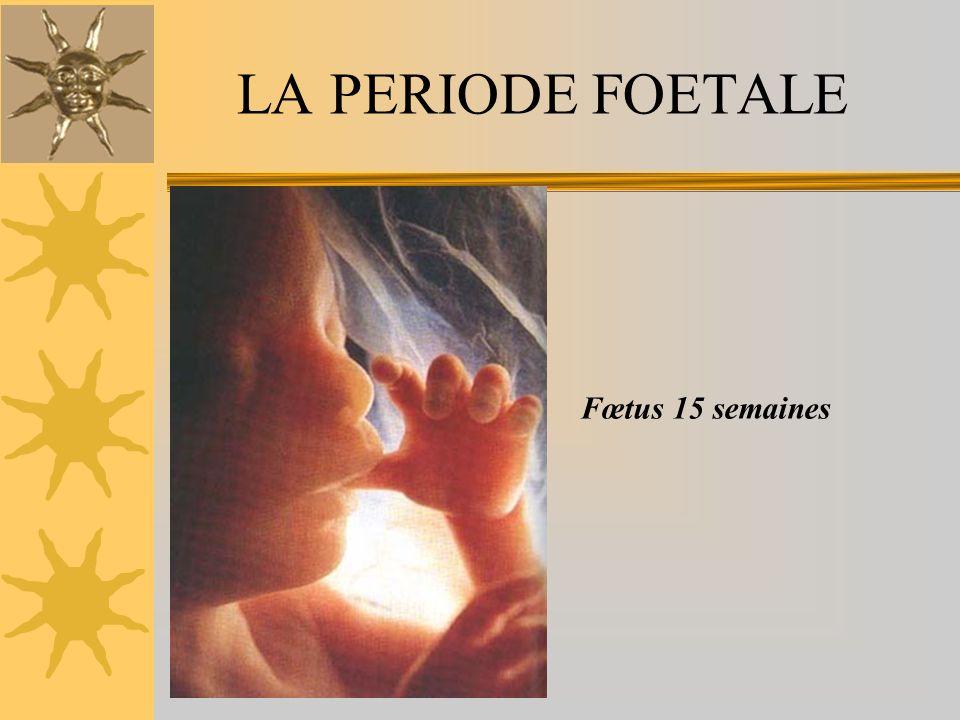 LA PERIODE FOETALE Fœtus 15 semaines