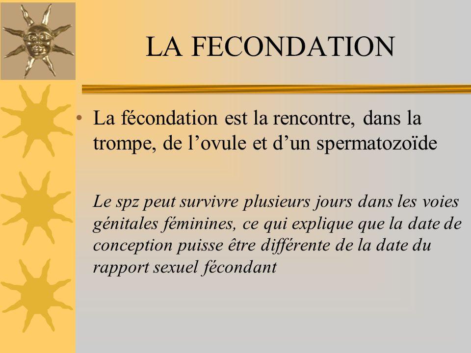LA FECONDATION La fécondation est la rencontre, dans la trompe, de l'ovule et d'un spermatozoïde.