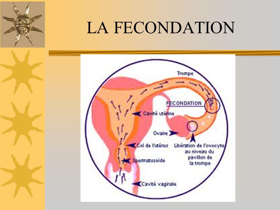 LA FECONDATION