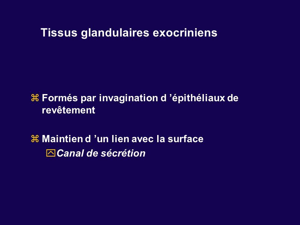 Tissus glandulaires exocriniens