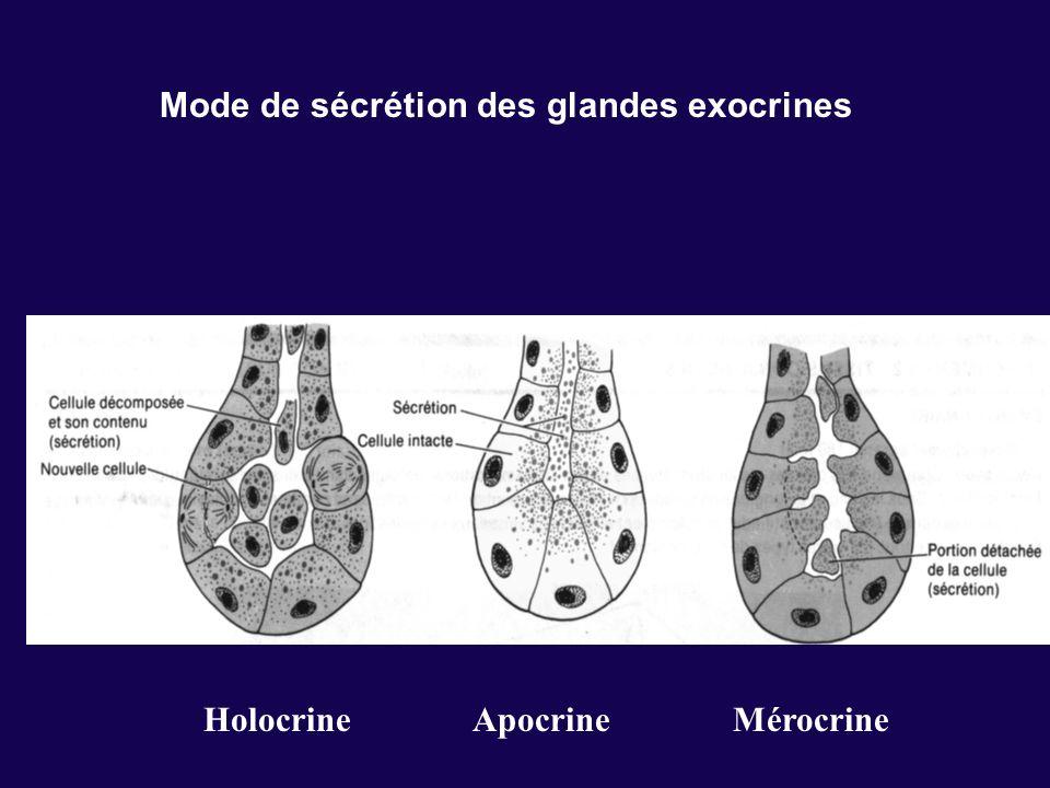 Mode de sécrétion des glandes exocrines