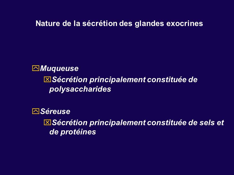 Nature de la sécrétion des glandes exocrines