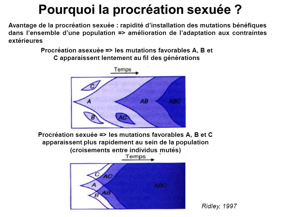 Pourquoi la procréation sexuée