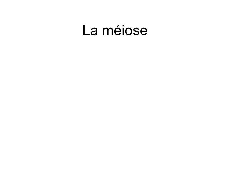 La méiose