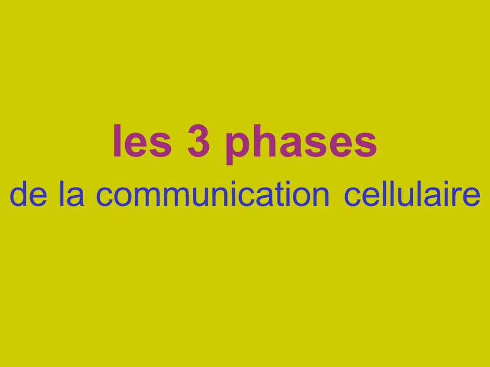 les 3 phases de la communication cellulaire
