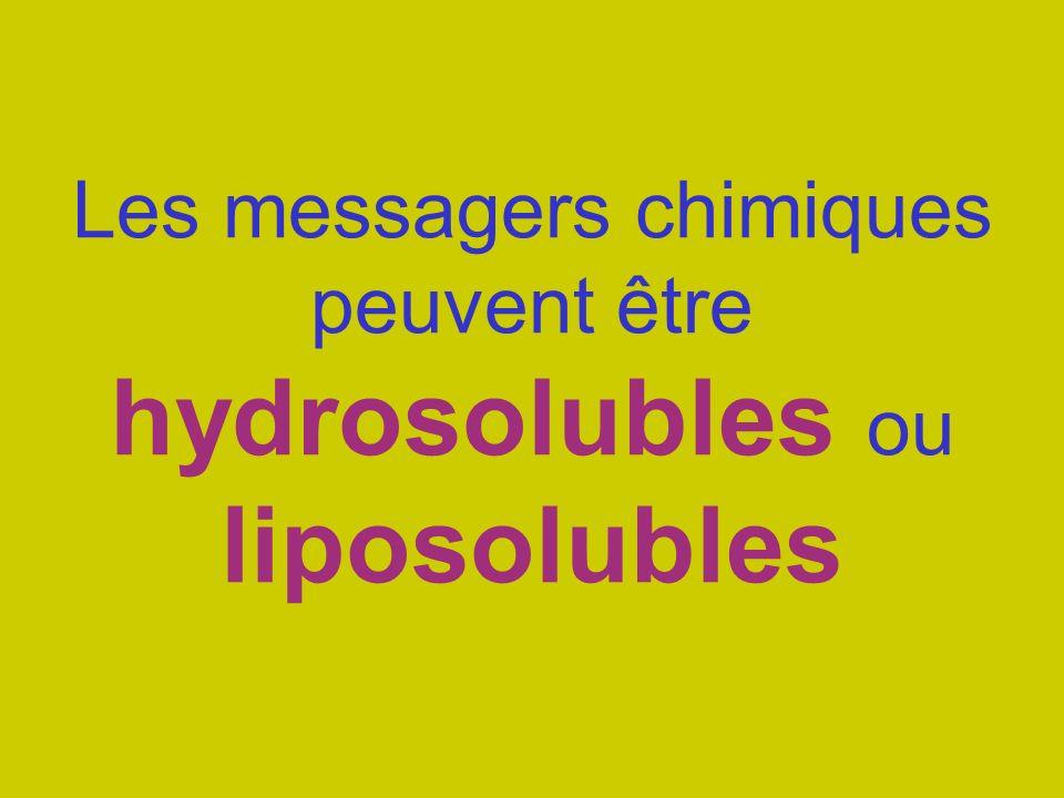 Les messagers chimiques peuvent être hydrosolubles ou liposolubles