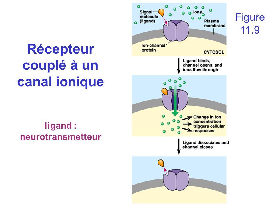 Récepteur couplé à un canal ionique ligand : neurotransmetteur