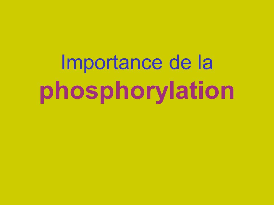 Importance de la phosphorylation