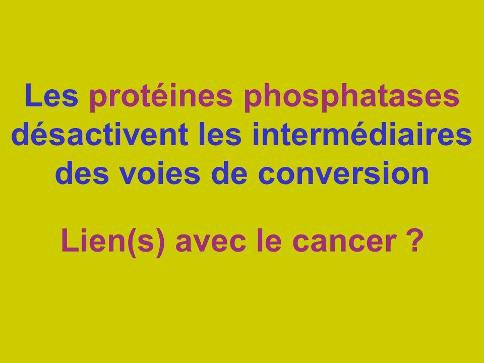 Les protéines phosphatases désactivent les intermédiaires des voies de conversion