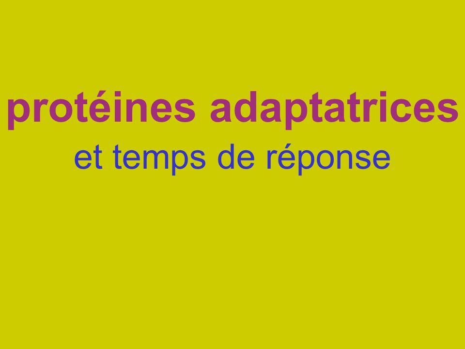 protéines adaptatrices et temps de réponse