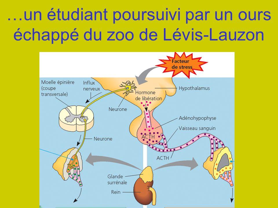 …un étudiant poursuivi par un ours échappé du zoo de Lévis-Lauzon