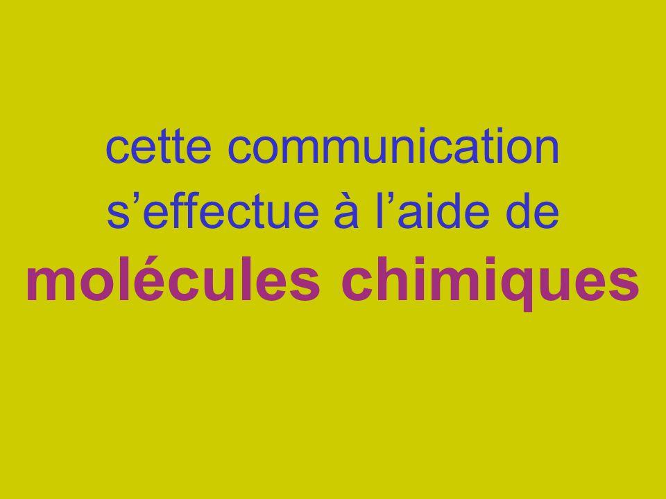 cette communication s'effectue à l'aide de molécules chimiques