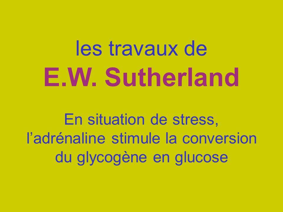 les travaux de E.W. Sutherland