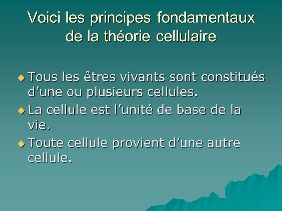 Voici les principes fondamentaux de la théorie cellulaire