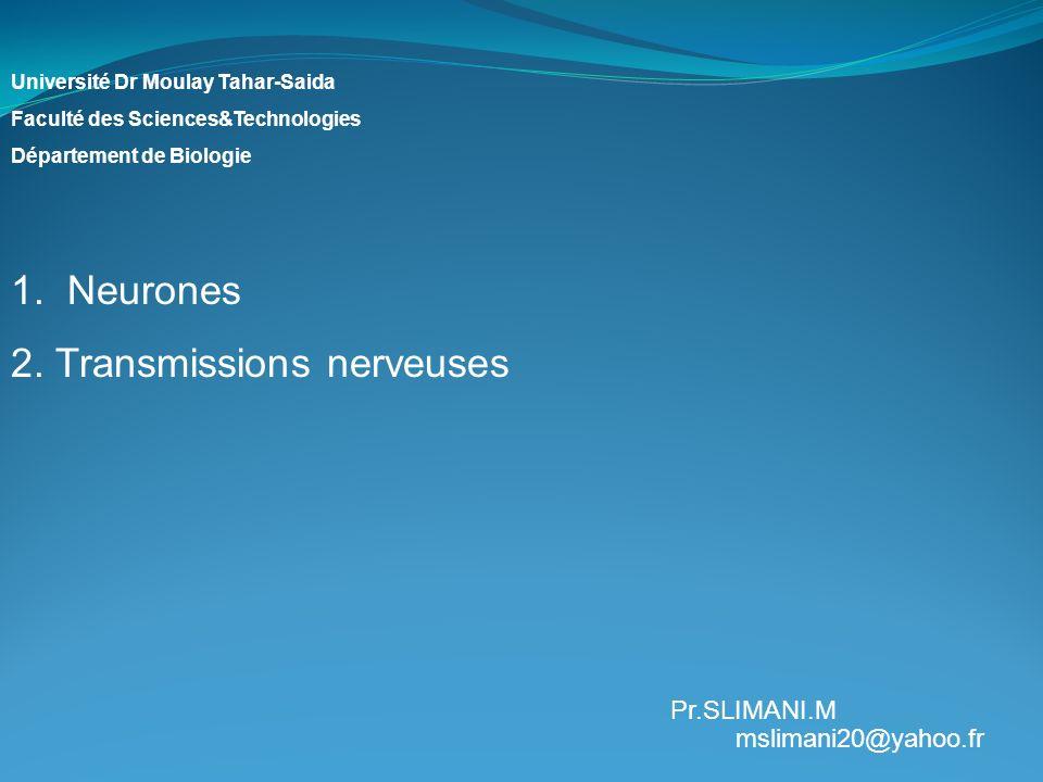 2. Transmissions nerveuses