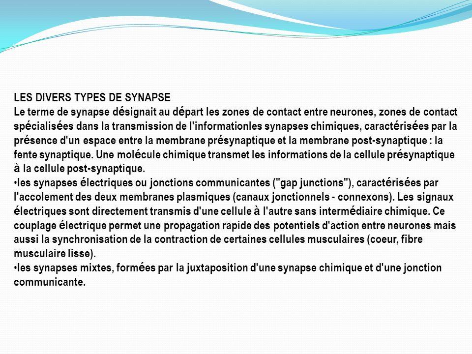 LES DIVERS TYPES DE SYNAPSE
