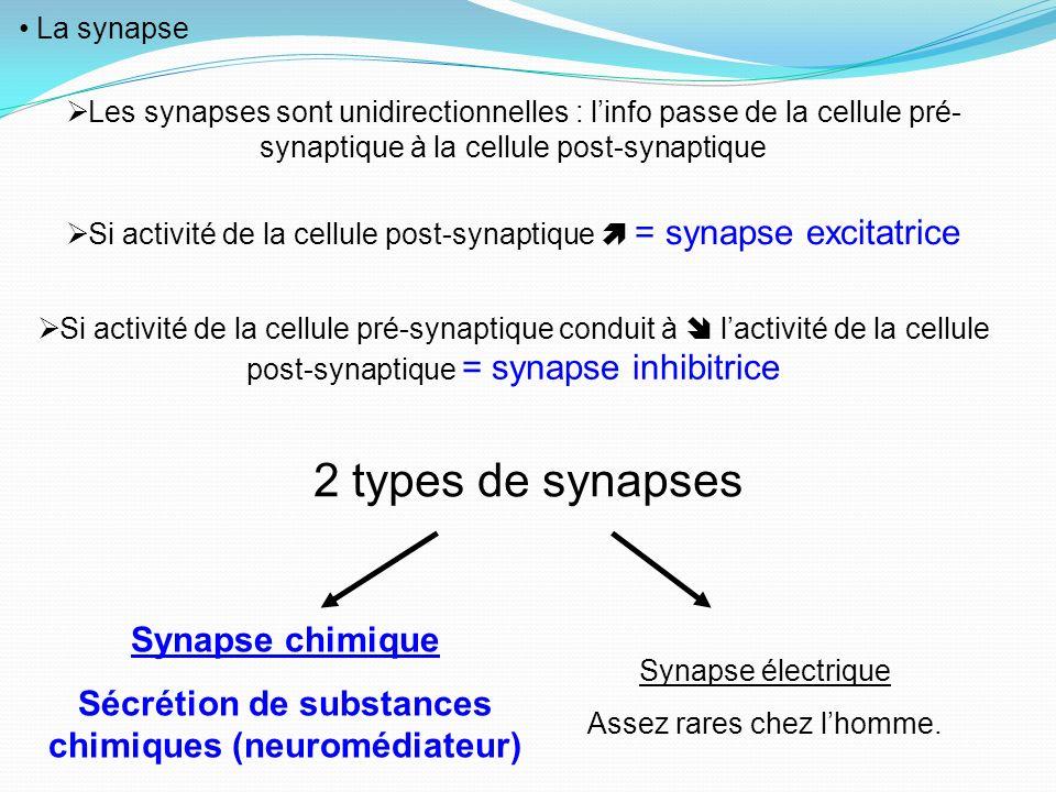Sécrétion de substances chimiques (neuromédiateur)