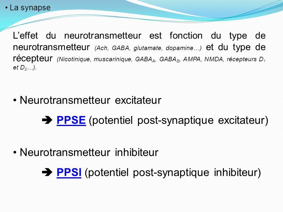 Neurotransmetteur excitateur