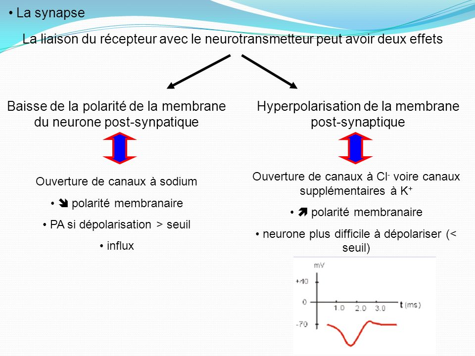 Baisse de la polarité de la membrane du neurone post-synpatique