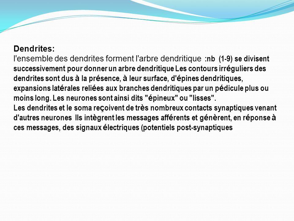 Dendrites:
