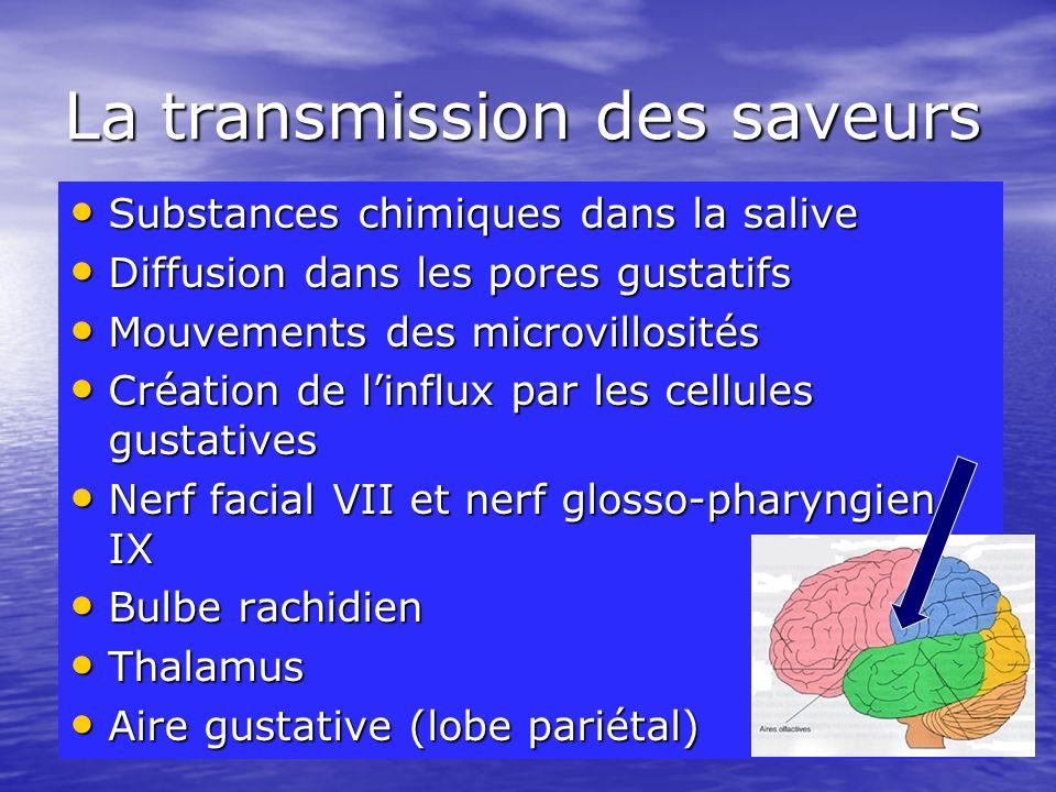 La transmission des saveurs
