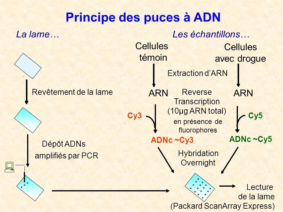 Principe des puces à ADN