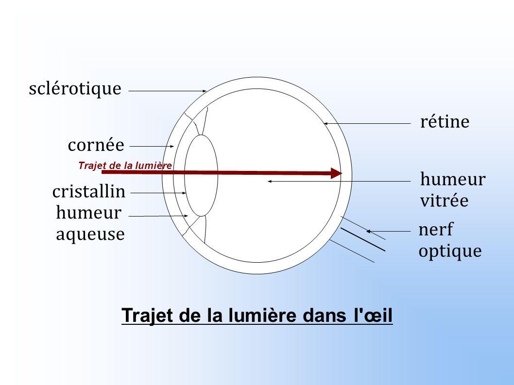 Trajet de la lumière dans l œil