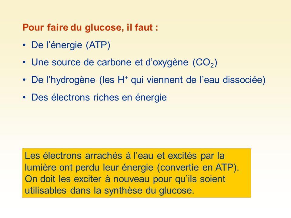 Pour faire du glucose, il faut :