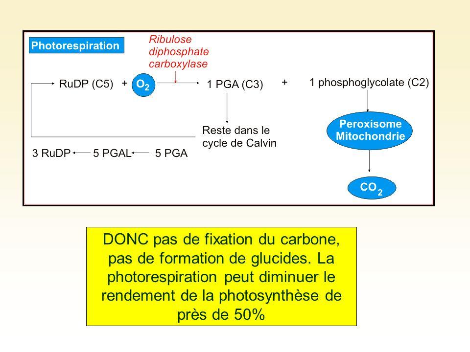 DONC pas de fixation du carbone, pas de formation de glucides