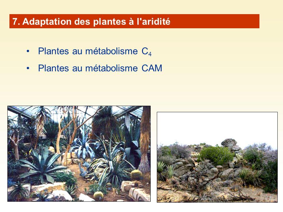 7. Adaptation des plantes à l aridité
