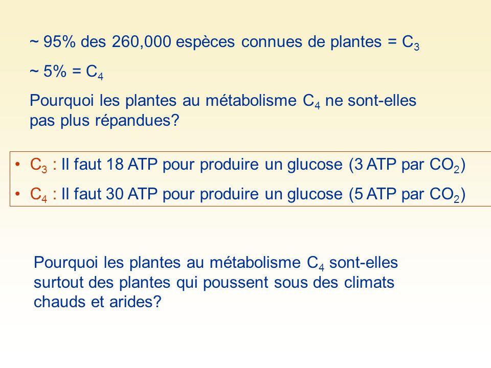 ~ 95% des 260,000 espèces connues de plantes = C3