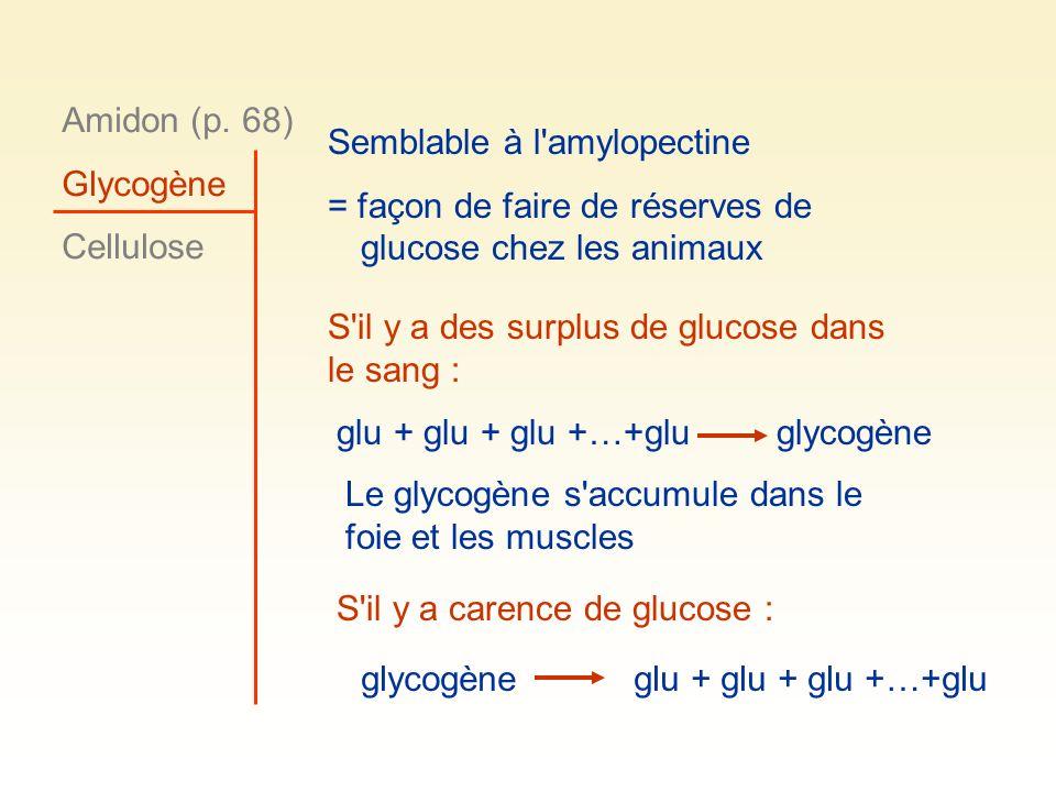 Amidon (p. 68) Glycogène. Cellulose. Semblable à l amylopectine. = façon de faire de réserves de glucose chez les animaux.