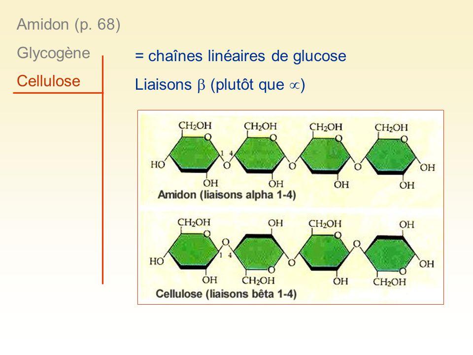 Amidon (p. 68) Glycogène Cellulose = chaînes linéaires de glucose Liaisons  (plutôt que )